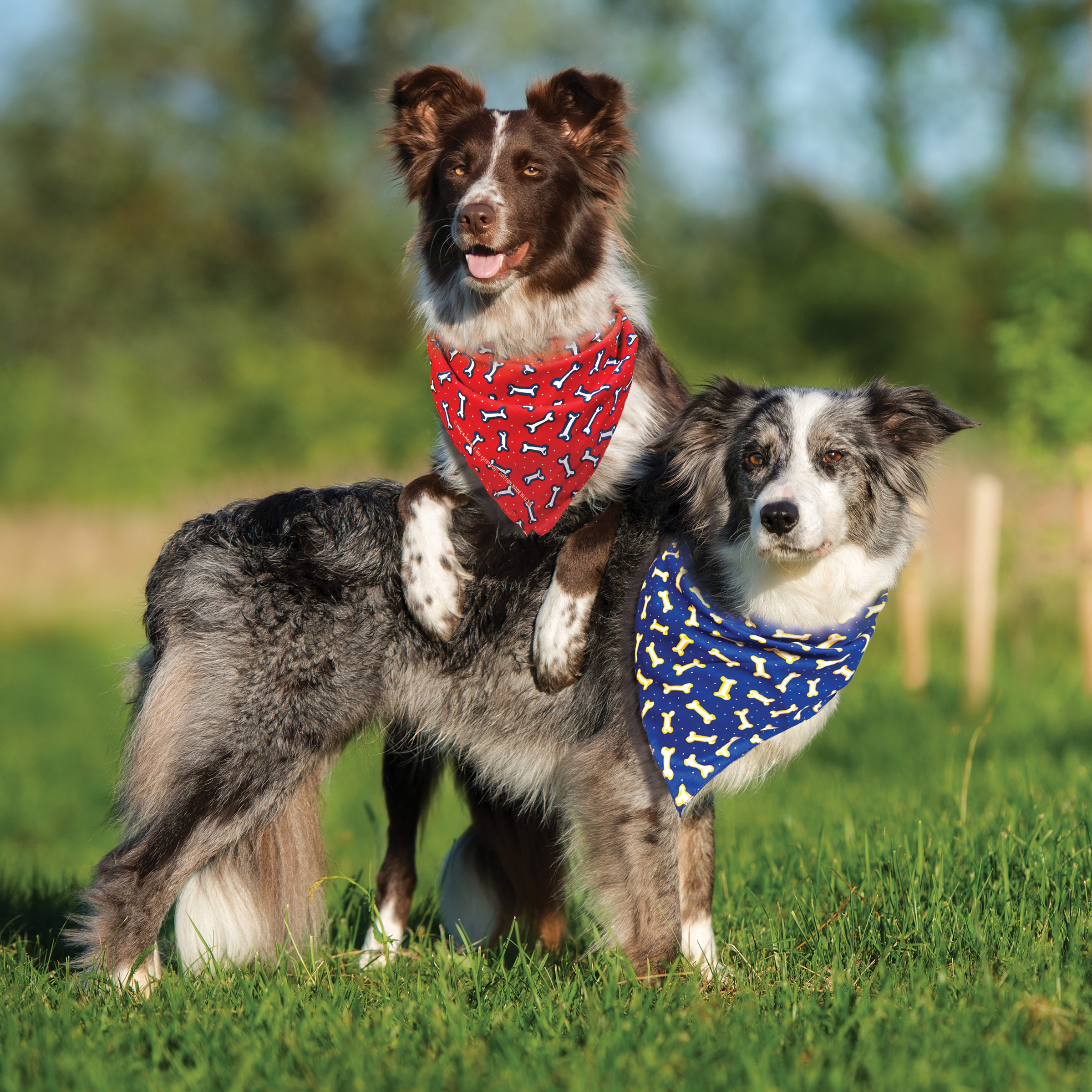 animal print bandannas on two dogs bandana